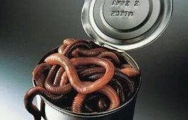 Can-of-Worms-420x270