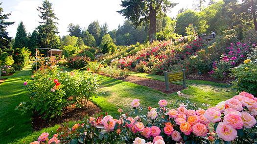 portland_rose_garden